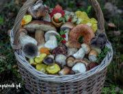 Kosz grzybów