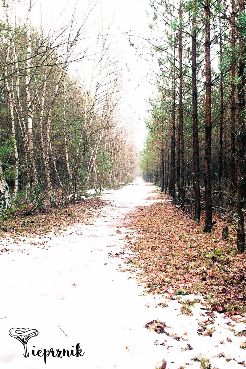 """Las w Kosarzynie, tu w sezonie """"tnę"""" naprawdę fantastyczne prawdziwki"""
