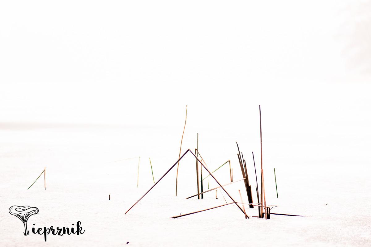 Jezioro Borek zimą