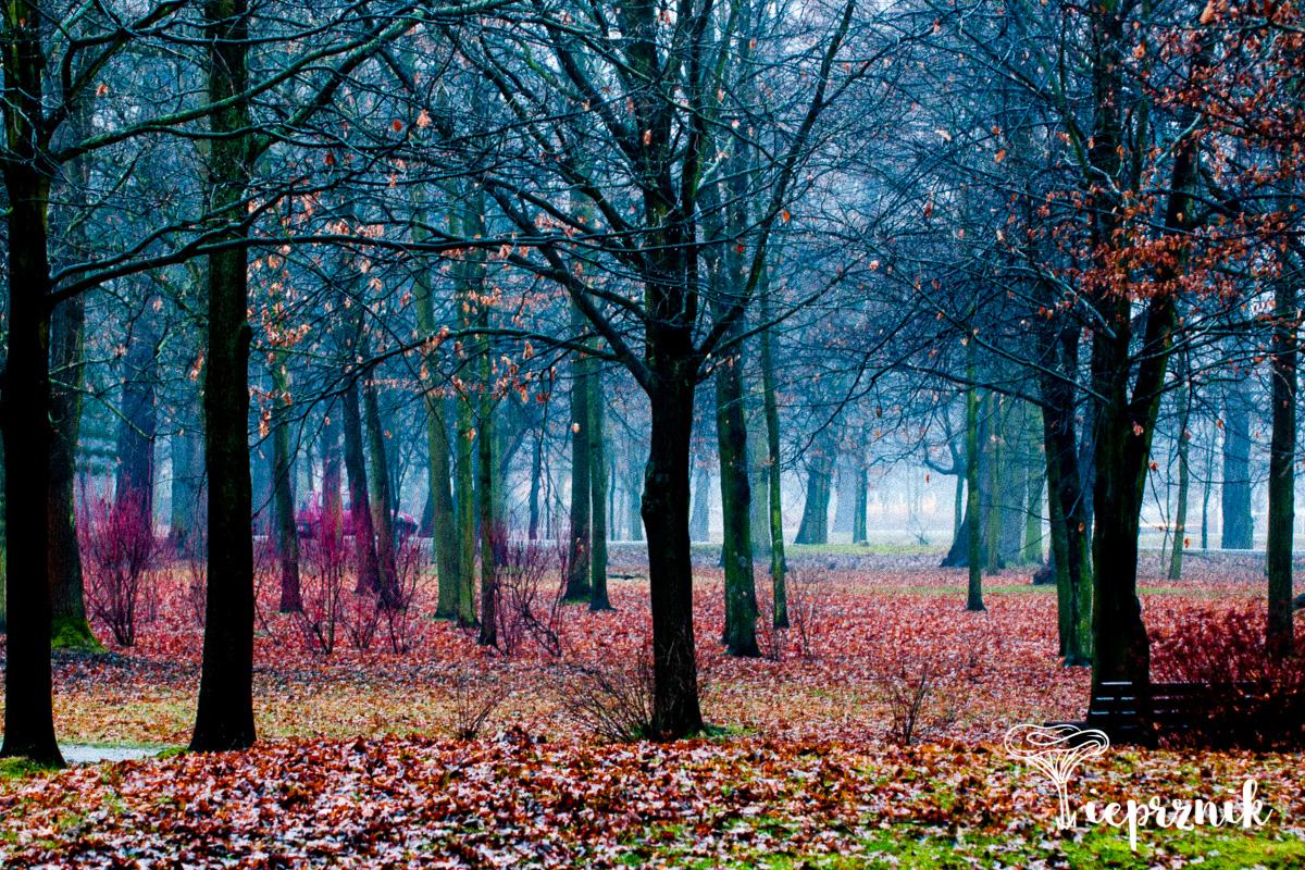Park Strachowicki zimą