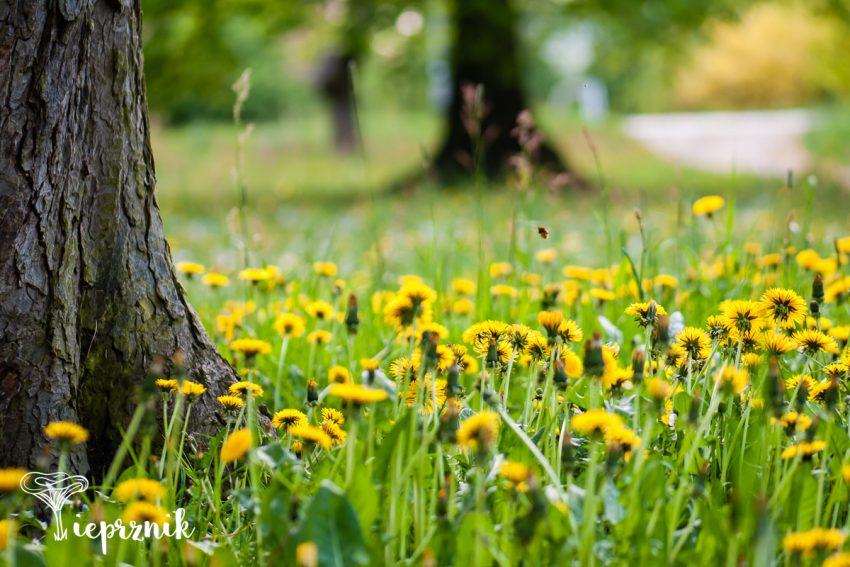 Park Strachowicki wiosną