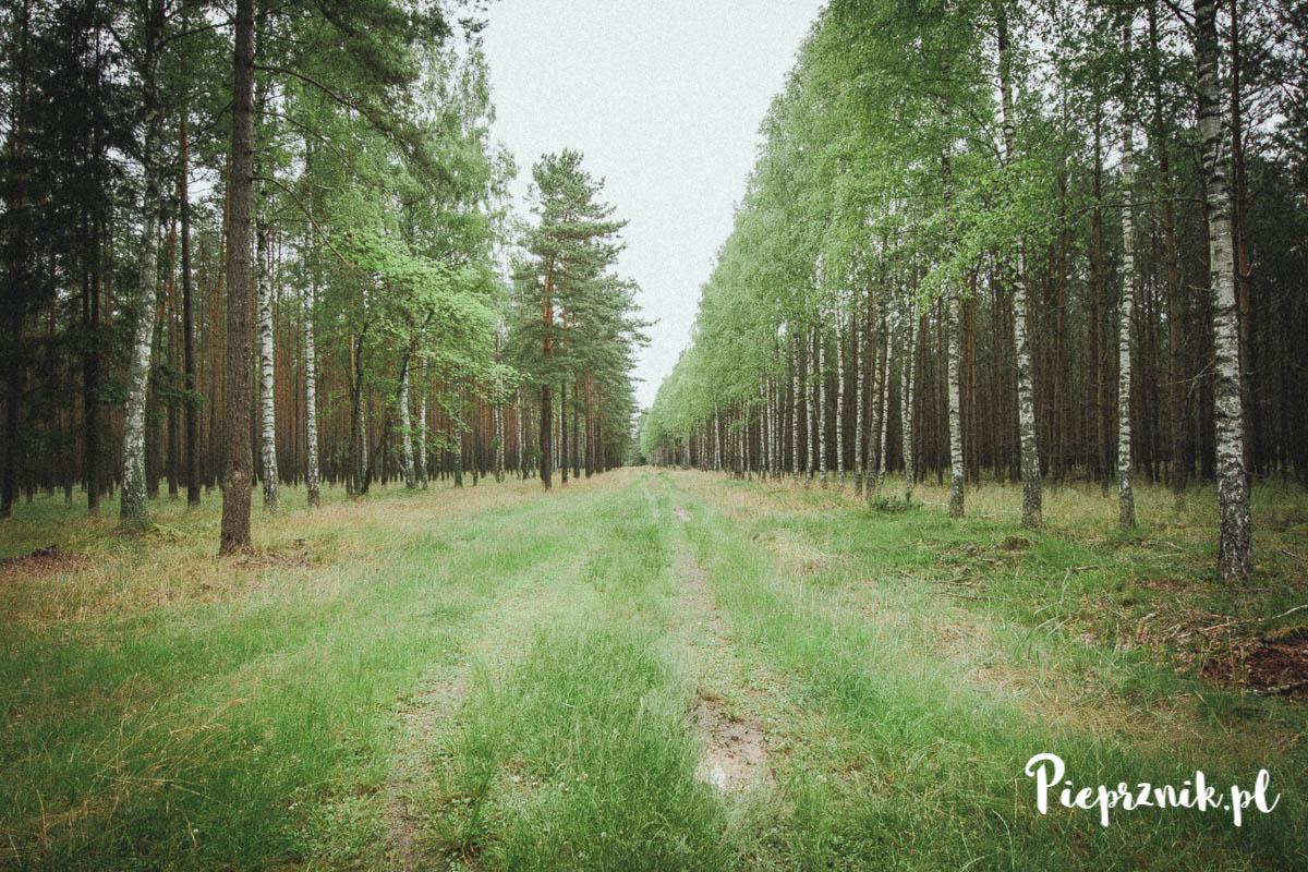 Lasy w województwie kujawsko-pomorskim