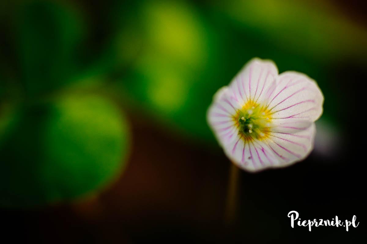 Las wiosną