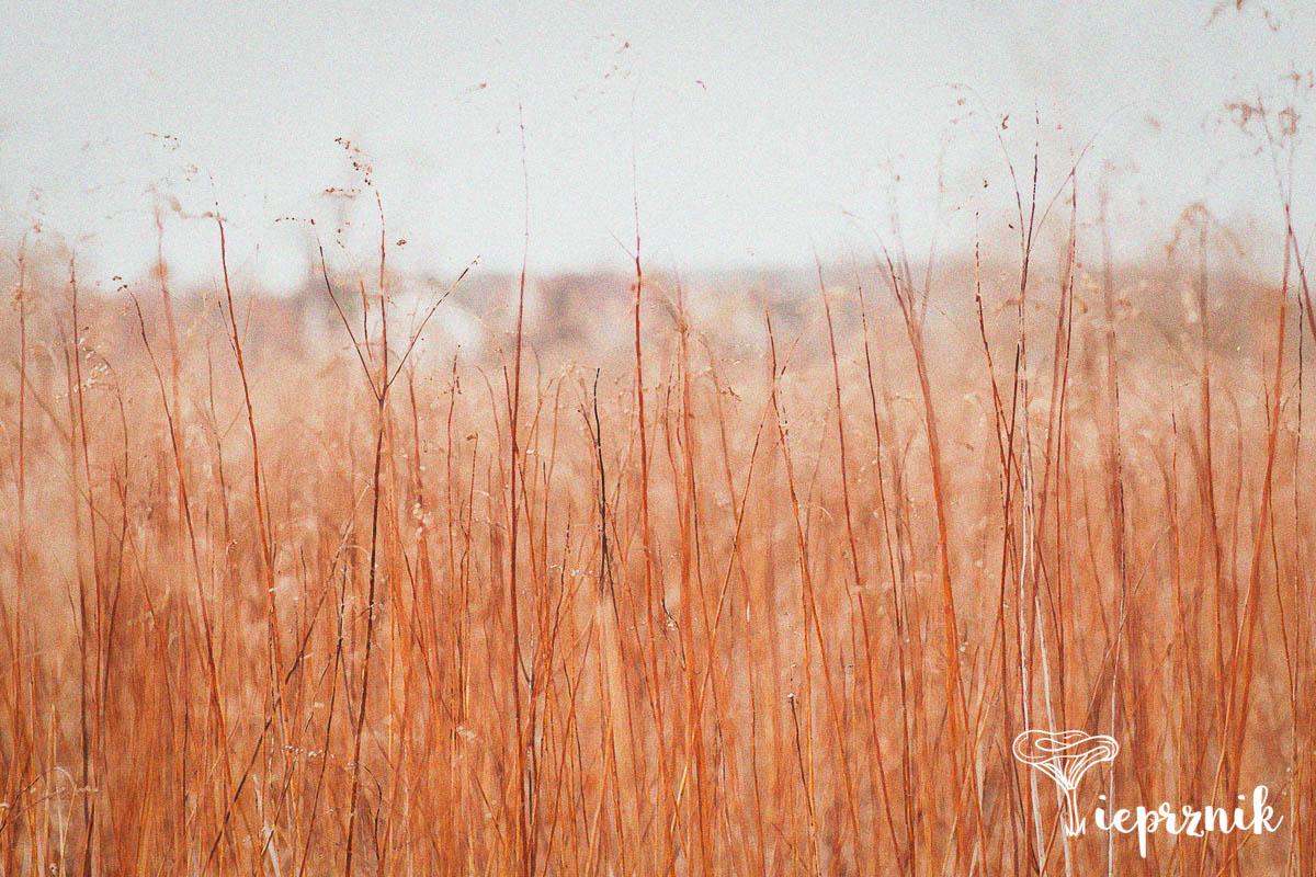 Miedziana łąka w przededniu wiosny