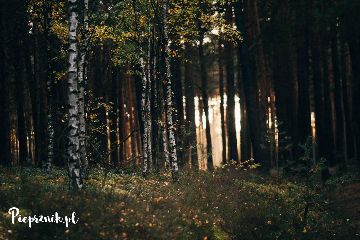 Las podgrzybkowy
