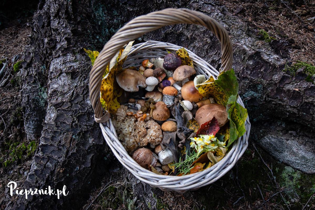 Kosz różnych grzybów