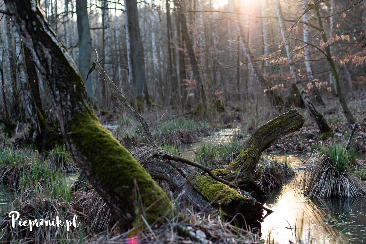 Rezerwat przyrody Olszyny Niezgodzkie