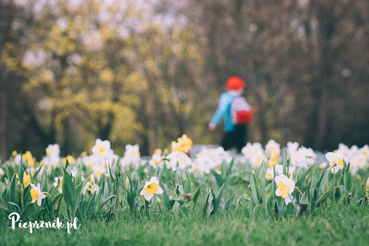 Wiosna we Wrocławiu